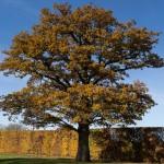 Autumn Oak - Broadhall Way - Stevenage